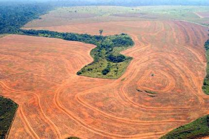 Increase in Amazon deforestation