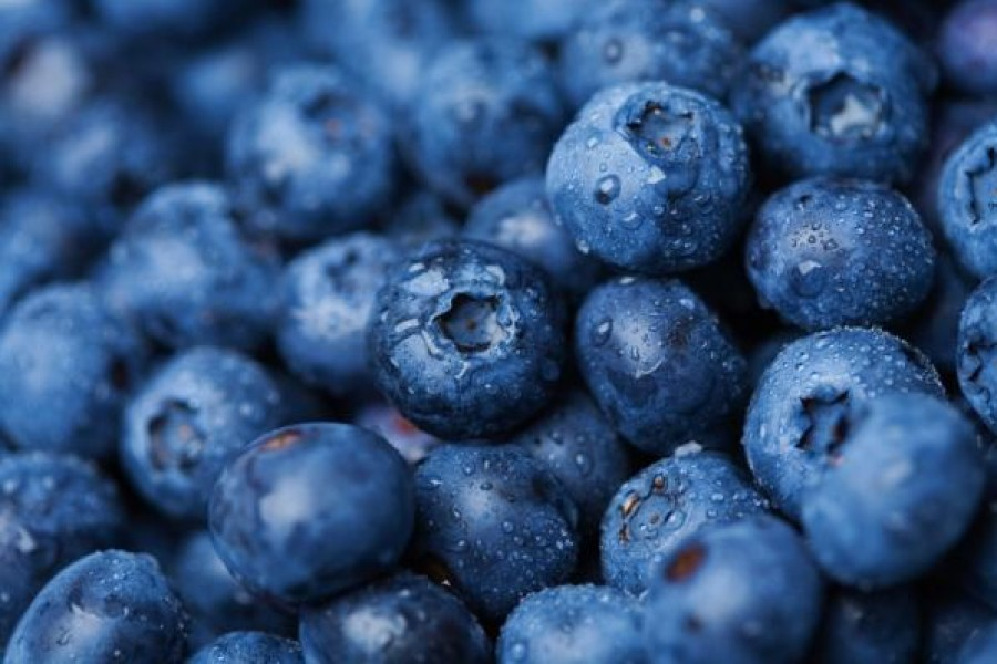 Blueberries can be the best medicine for many diseases