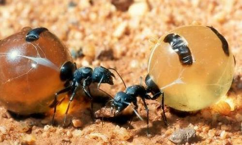 Strange physical ants