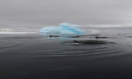 Uncover the mysterious puzzle sound in Antarctica