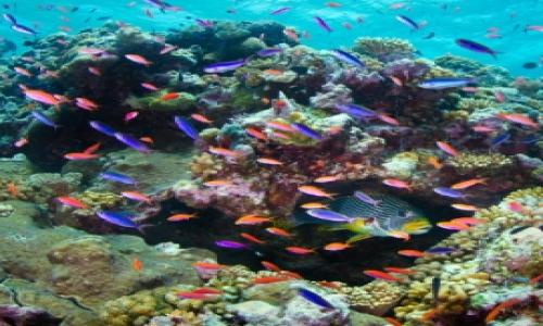 UNESCO threaten the development of the Great Barrier Reef on the list of endangered heritage