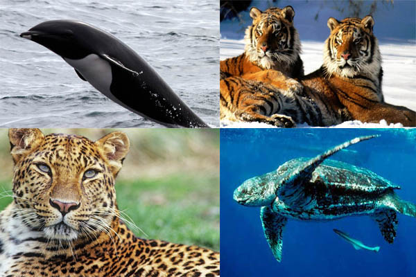 Top four endangered species of earth.